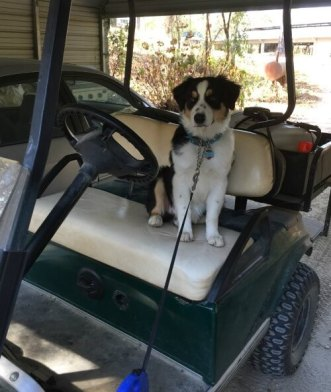 finn-on-the-golf-cart-5-12-months