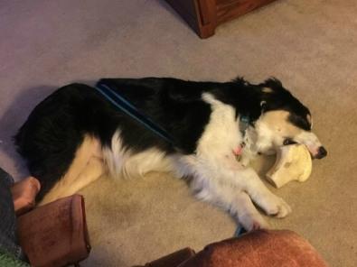 finn-asleep-with-his-bone