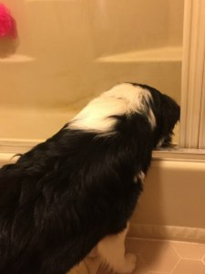 finn-checking-out-the-bathtub