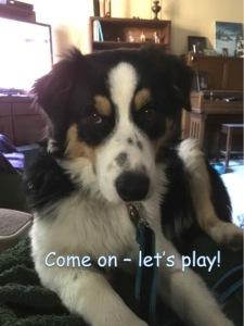 finn-lets-play